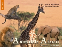 Animalele Africii Portrete natura