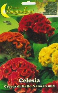 CELOSIA Cresta Gallo Nana mix
