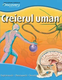 Creierul uman