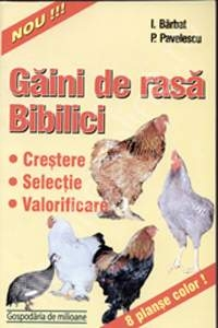 Gaini rasa bibilici (crestere selectie