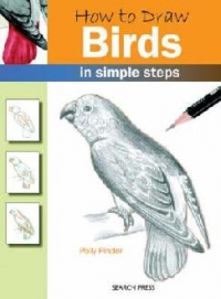 How Draw Birds
